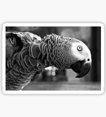 Tropical Parrot bird funny Sticker