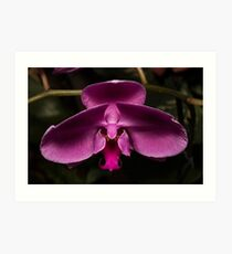 Outrageously Pink Orchid Art Print