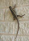 Lizard by Cathy Jones