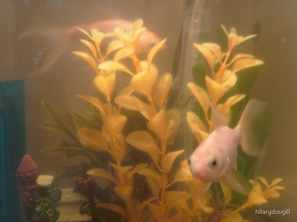 Amber's fish by hilarydougill