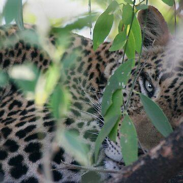 Leopard Hiding by SteveBulford