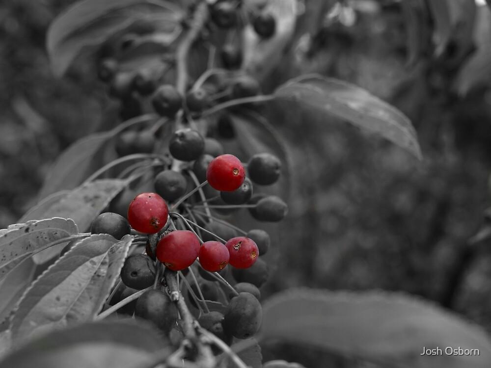 Crimson Berry by Josh Osborn