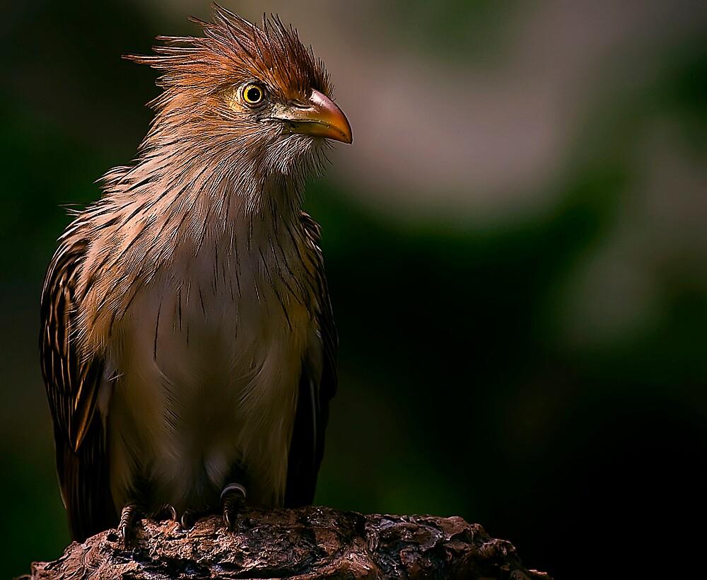 Precious Birdie by Cheri  McEachin