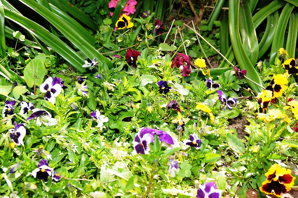 Pansy's Garden by HEIDI  HORVATH