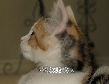 Diamonds are for Kittens by Kory