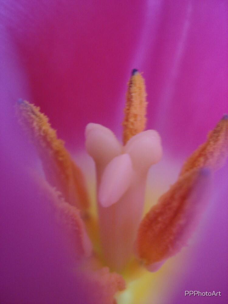 inside the tulip by PPPhotoArt