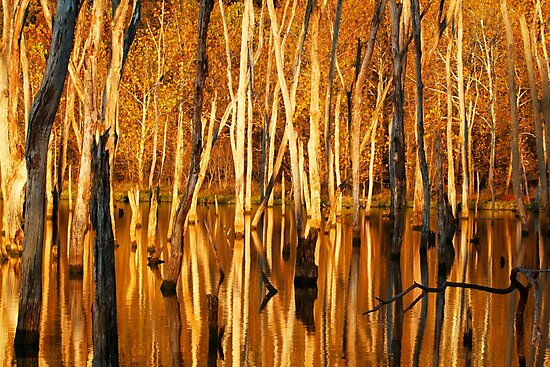 Autumn Gold by dlhedberg