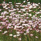 Flowering moss bright flowers by mrivserg