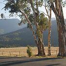 Buckland Valley Victoria by johnrf