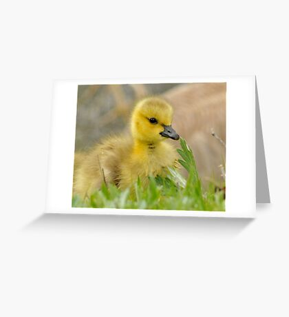 Spring Perfect Greeting Card