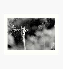 portrait of giraffe Art Print