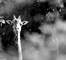 portrait of giraffe by Marianna Tankelevich