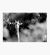 portrait of giraffe Photographic Print