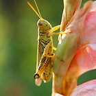 Grasshopper on Flower by Rachael Martin