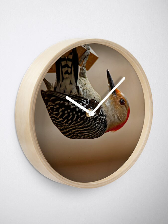 Alternate view of Red-Bellied Woodpecker on a Feeder Clock