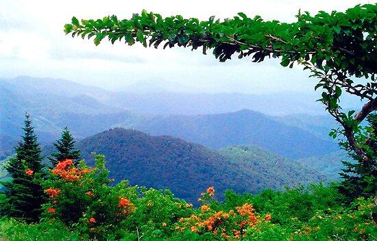 Wild Azalea View by Annlynn Ward