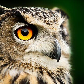 Eagle Eyes by asabphotography