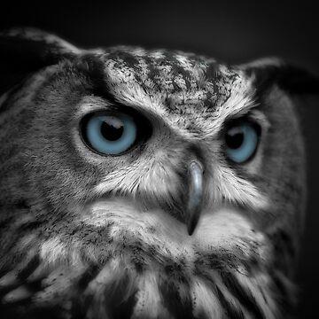 Blue Eyes by asabphotography