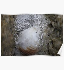 Nature's Bubbly Poster