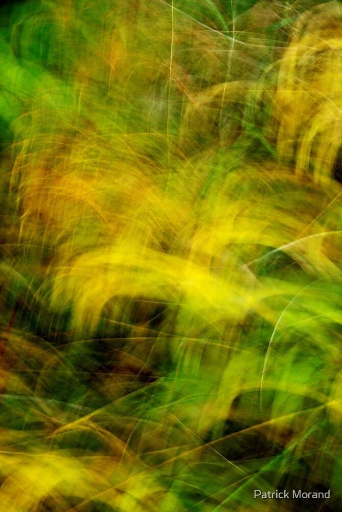 Autumn grasses by Patrick Morand