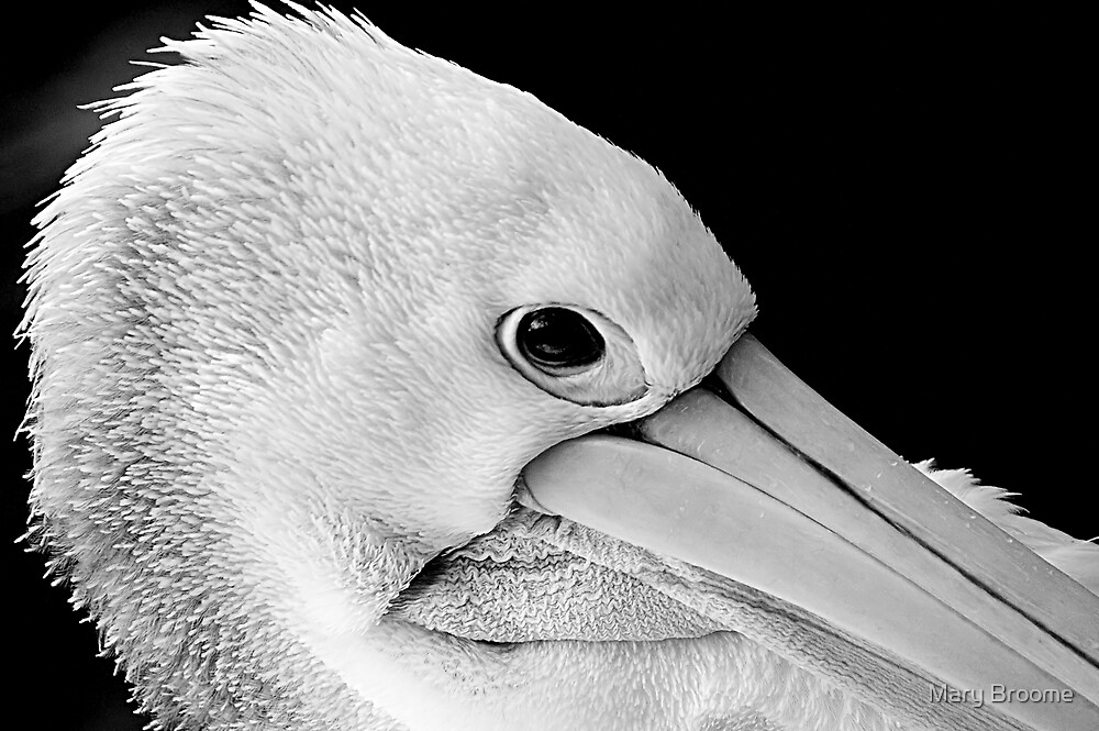 Pelican by Mary Broome