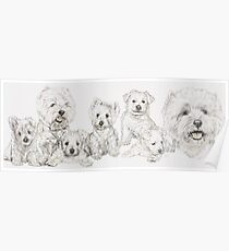 Growing Up West Highland White Terrier Poster