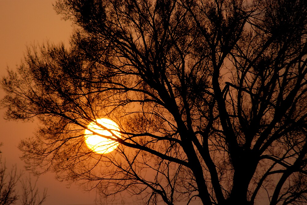 Sunsets Growing On Trees by Robert Baker