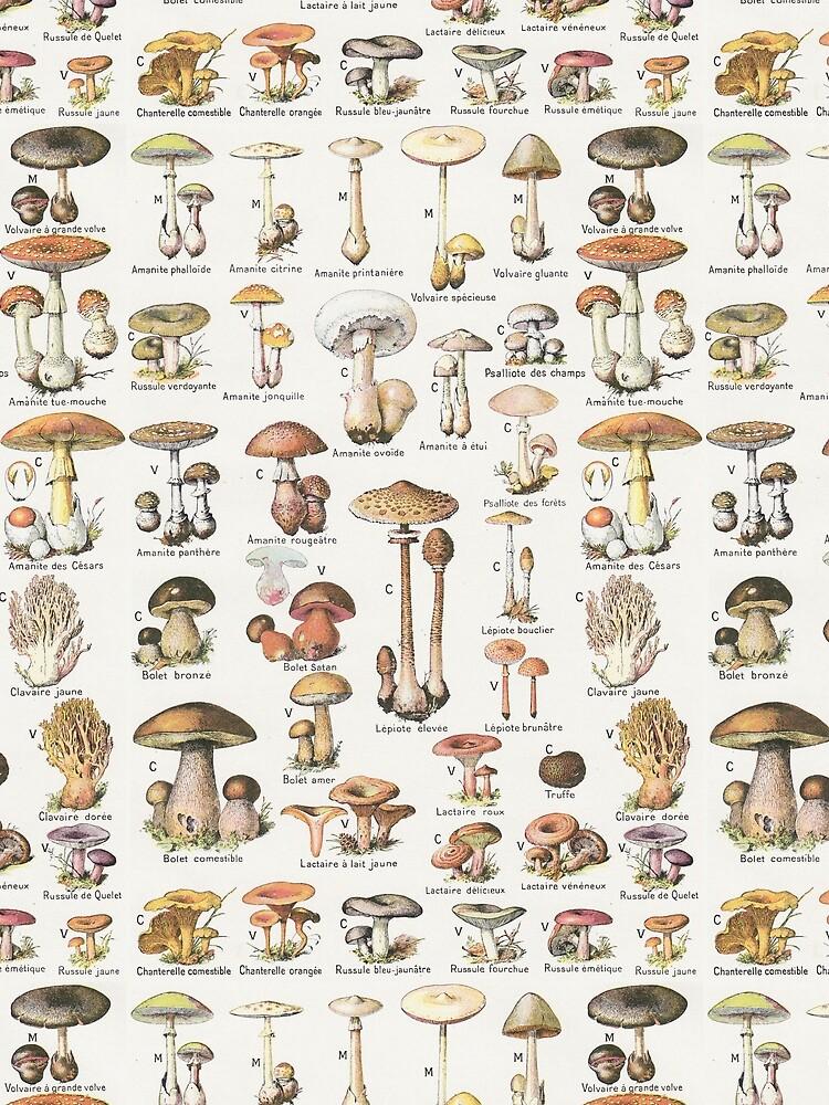 Mushrooms by ModularMork