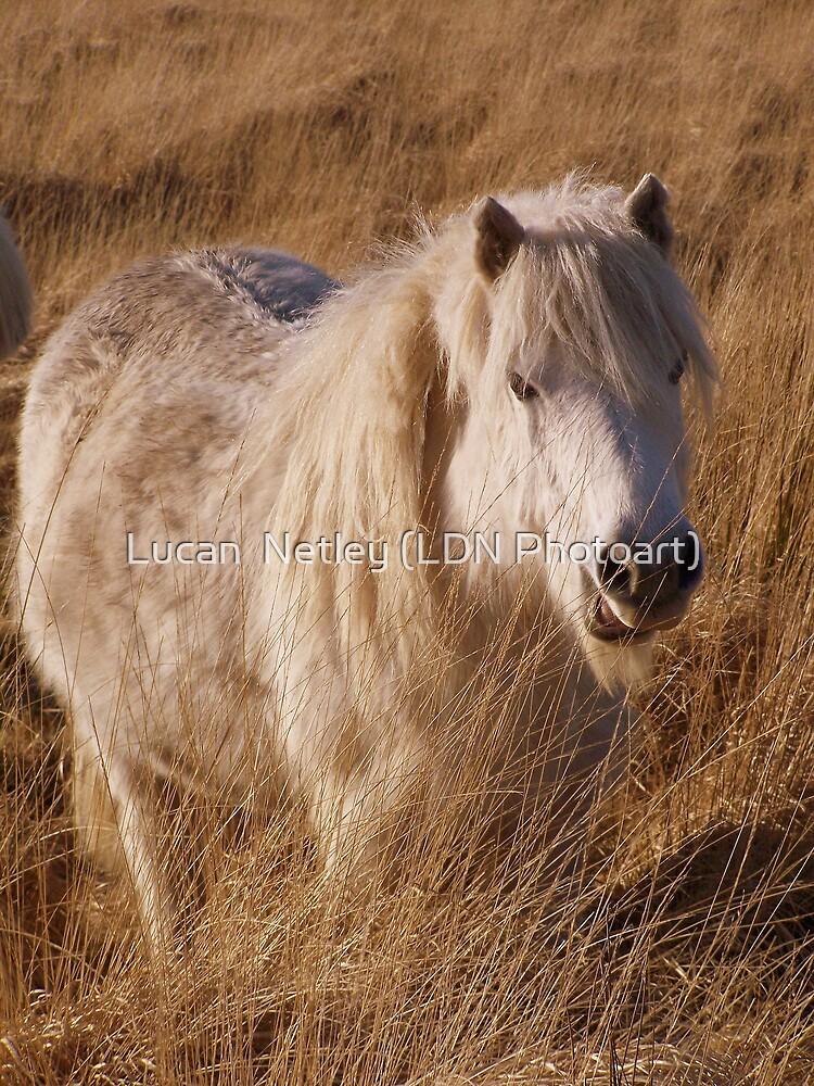 roaming in the long grass by Lucan  Netley (LDN Photoart)