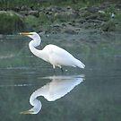 Egret, Fish, Reflection by Veronica Schultz