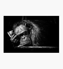 Sleeping Chimpanzee Photographic Print