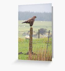 buzzard on the cornish moors (reworked) Greeting Card