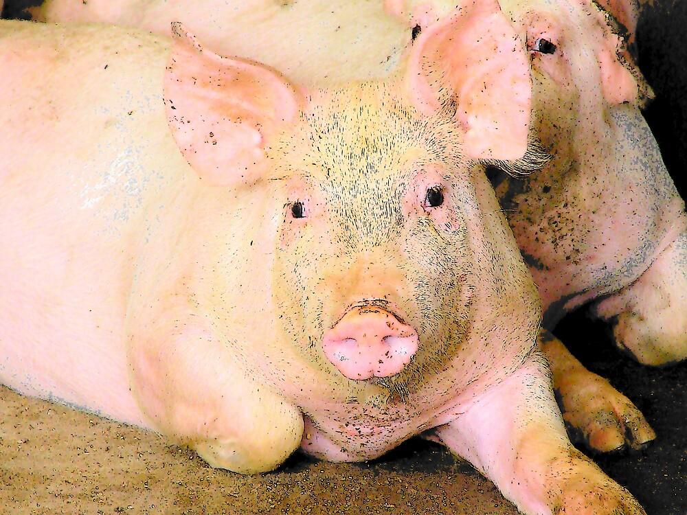 piggy by angelandspot