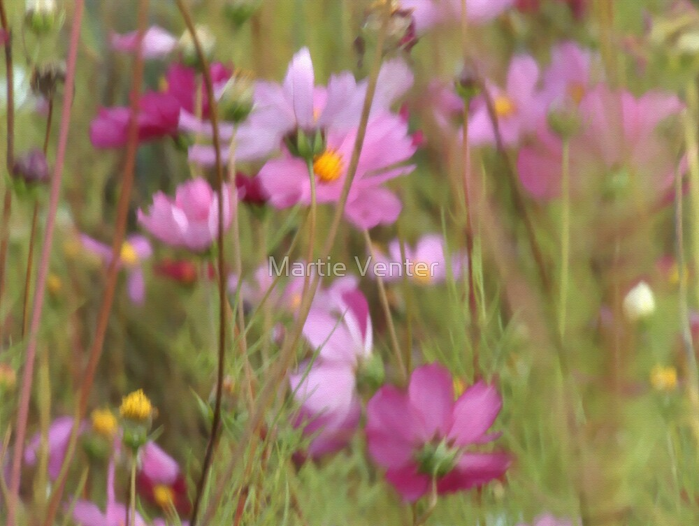 Painted Cosmos by Martie Venter