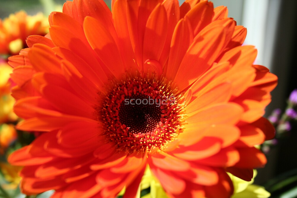 flower  by scooby29