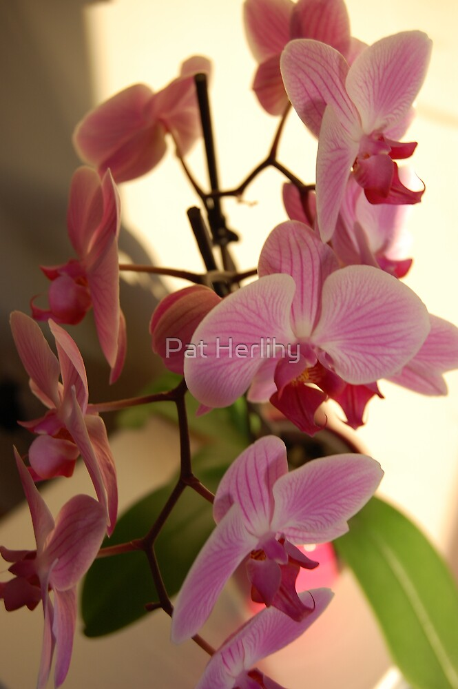 Floral Beauty 1 by Pat Herlihy