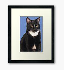 Vincent on Blue Framed Print