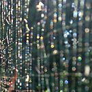 Nature's Matrix by Lachlan Kent