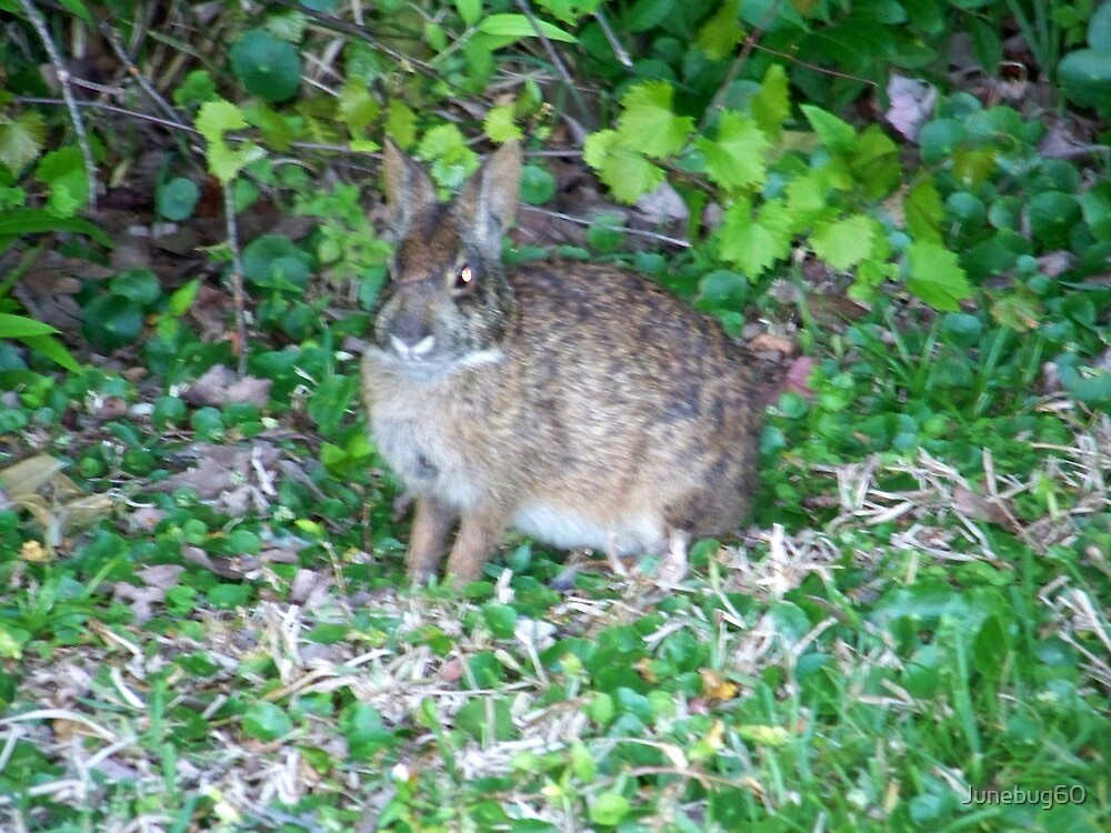 """A """"Wild"""" Hare by Junebug60"""