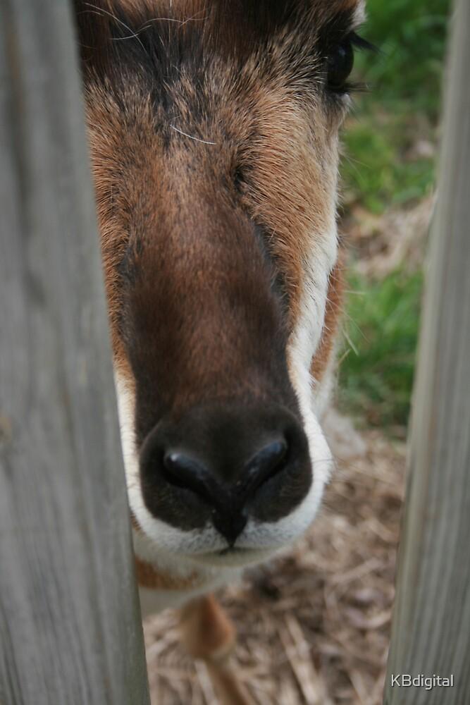 Peek-a-boo! by KBdigital