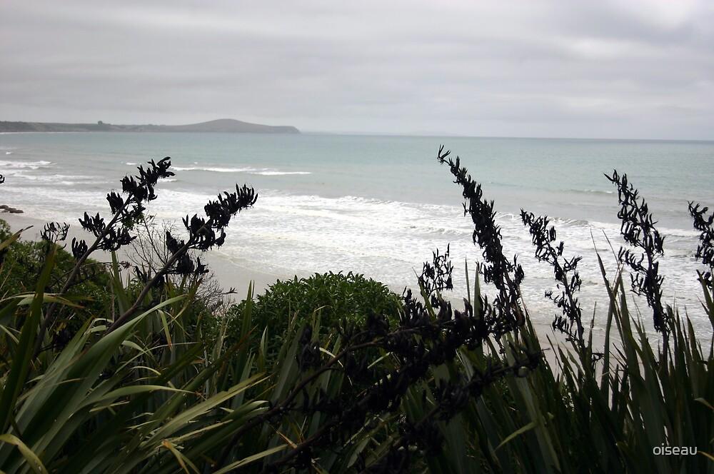 Atlantic side of South Island NZ by oiseau