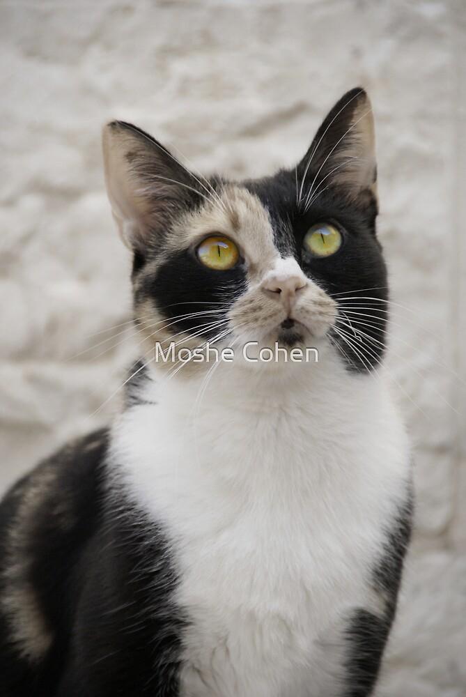 Cat eyes by Moshe Cohen