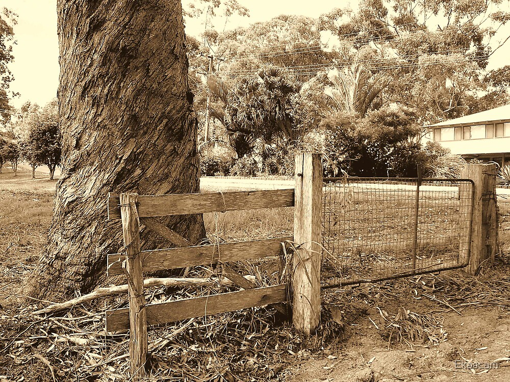 A GATE & FENCE TO KEEP THE TREE IN. by Ekascam