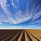 Oh Dem Cotton Fields by Peter Doré