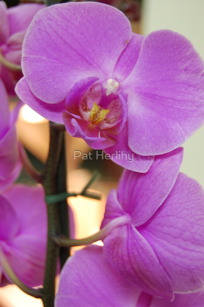 Floral Beauty 2 by Pat Herlihy