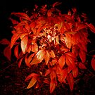The Burning Bush by KeepsakesPhotography Michael Rowley