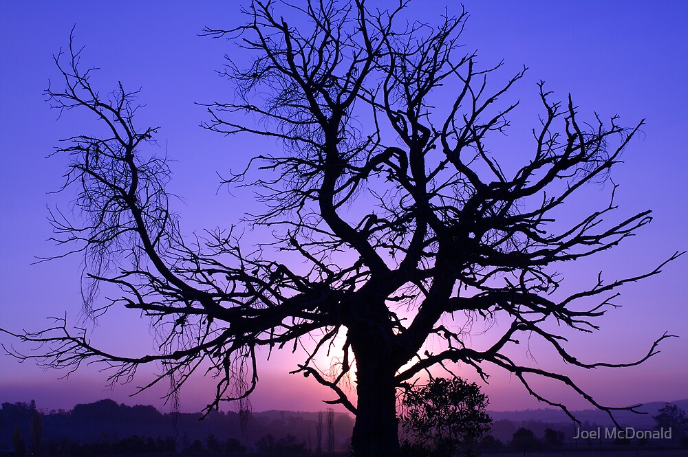 Twisted Tree Silhouette by Joel McDonald