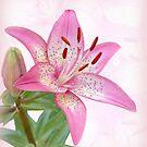 Asiatic Lily Trogon by Sandy Keeton
