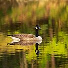 Spectacle 4 Goose by Richard G Witham