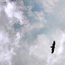 Flight by Sandra Moore